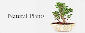 Upto 35% OFF on Natural Plants + Extra 4% Cashback